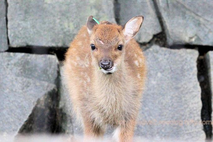 Deer2018061