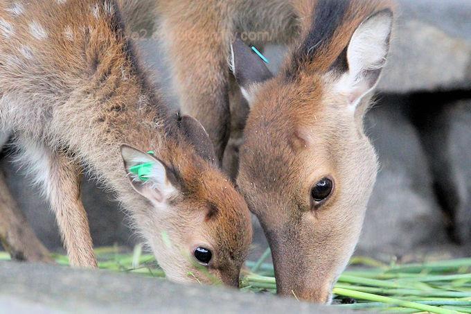 Deer2018063
