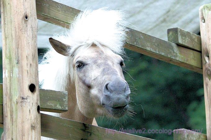 Horse201806