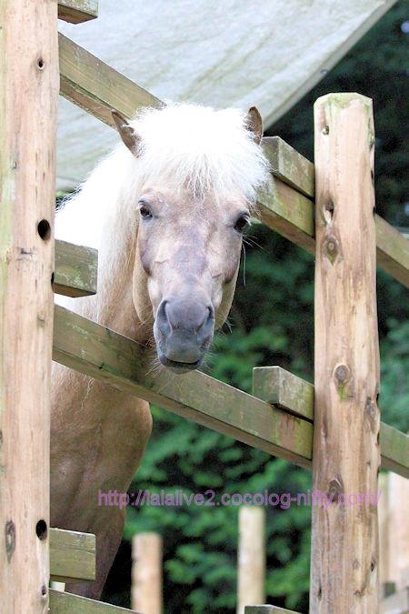 Horse2018061
