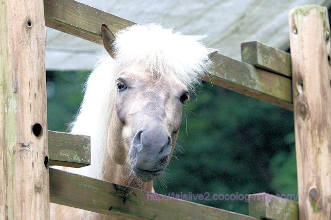 Horse2018062