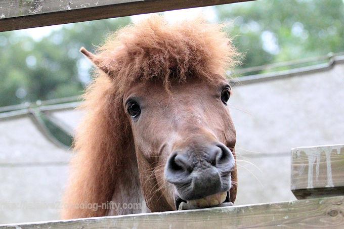 Horse2018063