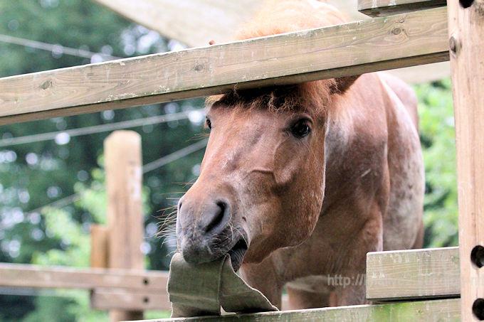 Horse2018064