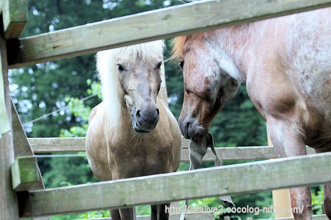 Horse2018065
