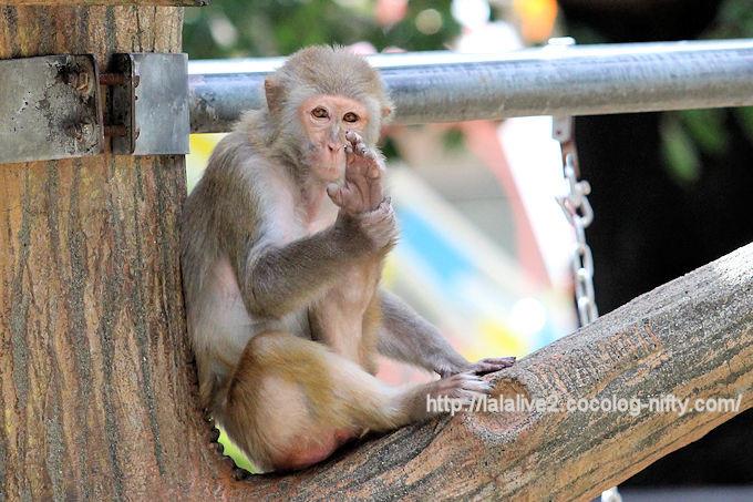 Monkey201809
