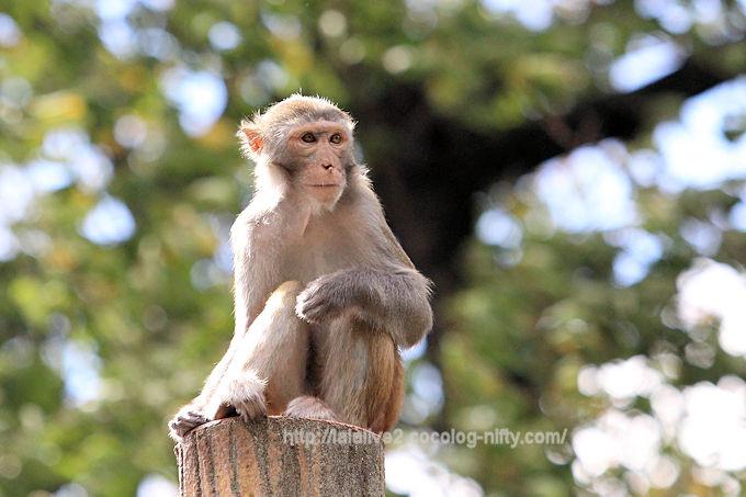 Monkey2018091