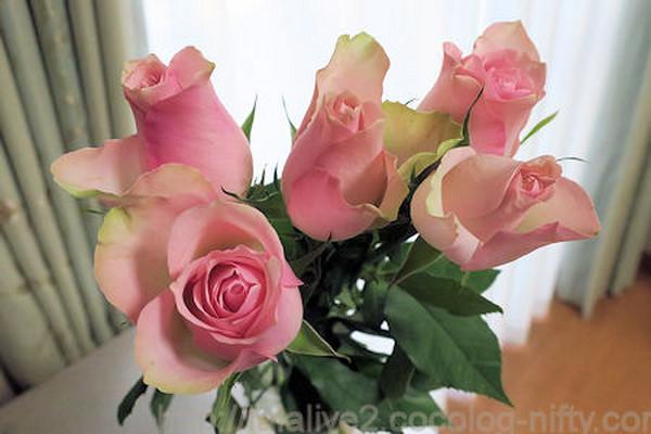 Roses201810