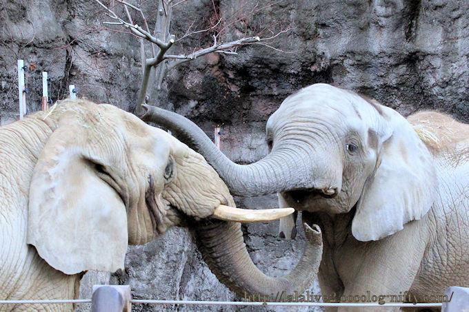 Elephants201812