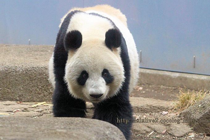 Panda201902