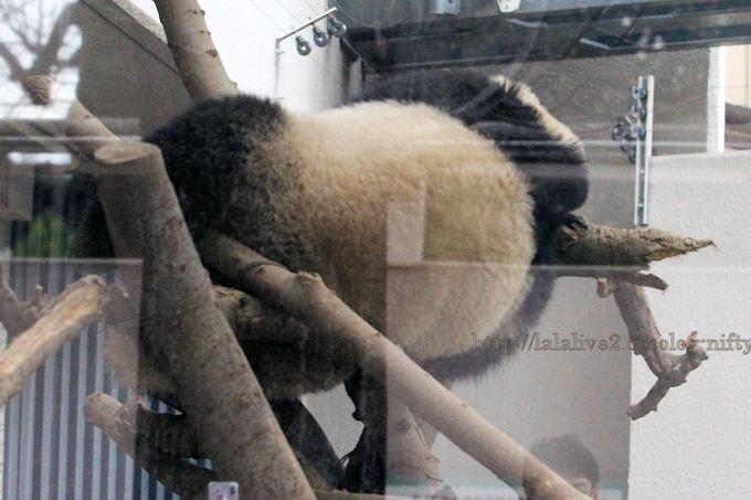 Panda2019021
