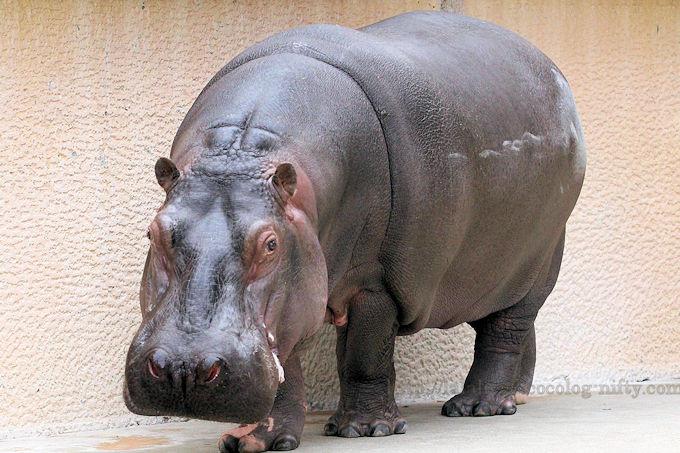 Hippo2019021