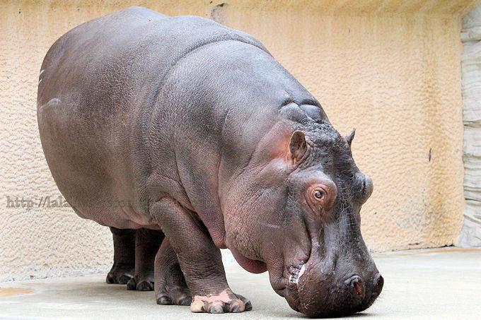 Hippo2019023