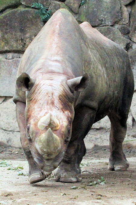 Rhino201902