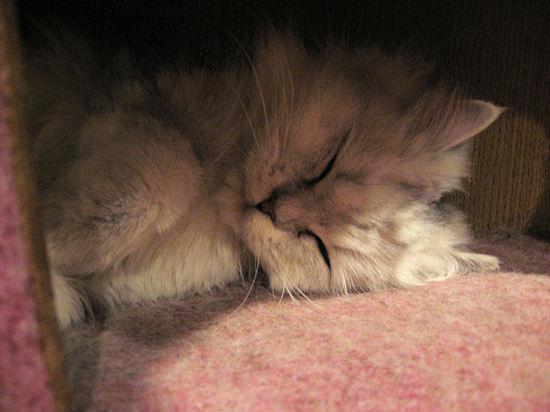 Cat2007sunshine