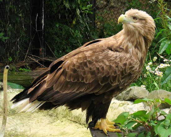 Eagle20070514