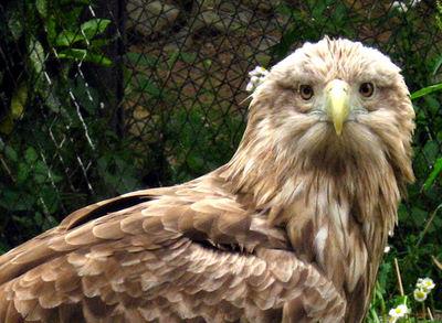 Eagle200705141