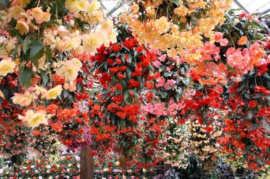 Flower200702241