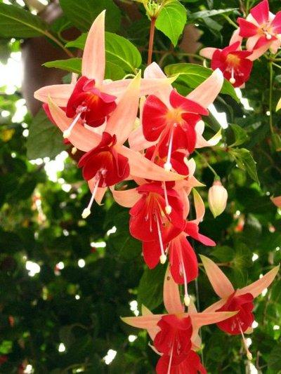 Flower20070225
