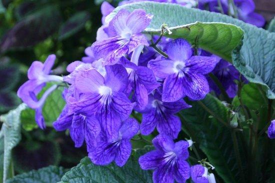 Flower200702251_1