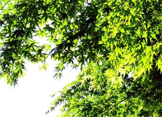 Green200704301_1