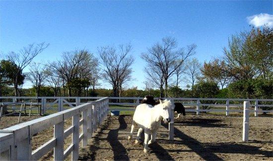 Horses20070414