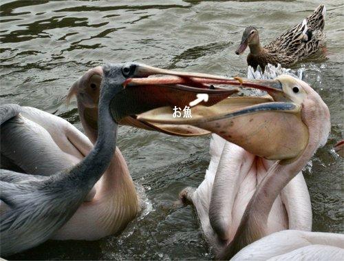 Pelican200702253