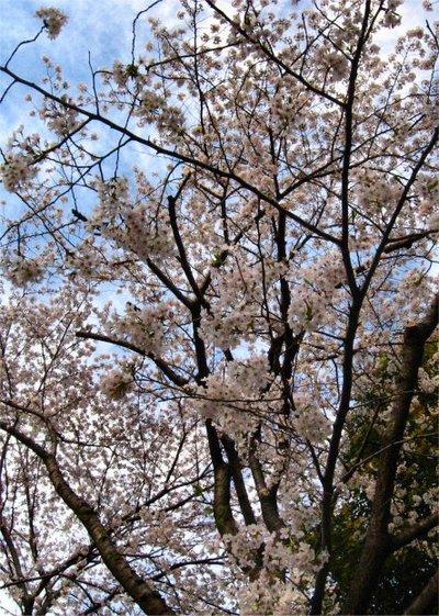Sakura200703301_1