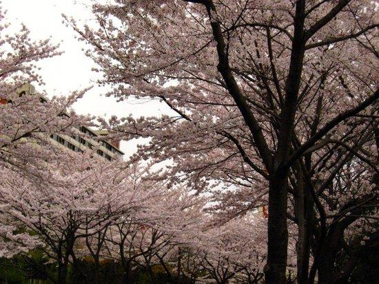 Sakura200704011