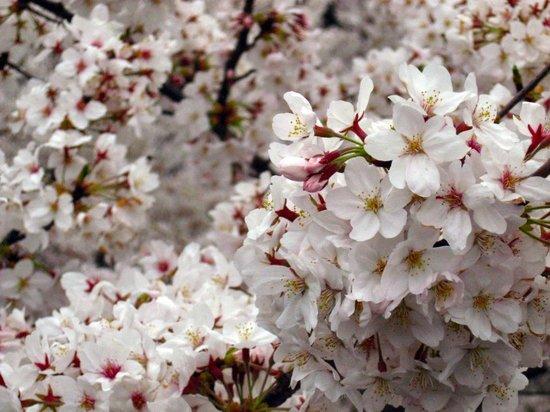 Sakura200704012