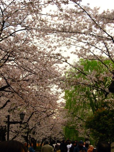 Sakura200704051_1
