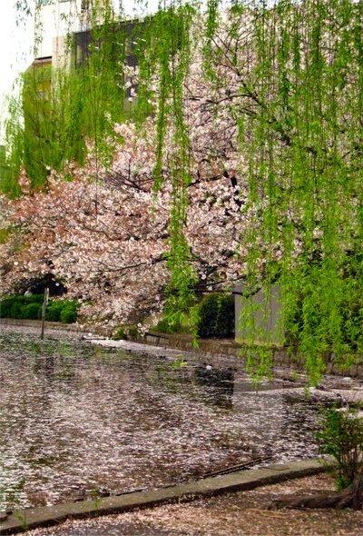 Sakura200704052