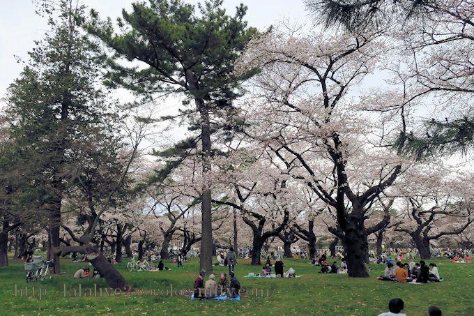 Sakura201903_1