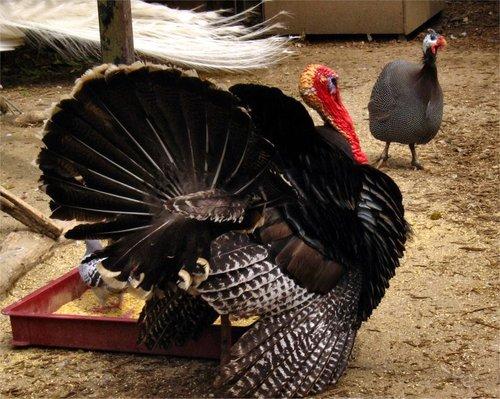 Turkey20070514