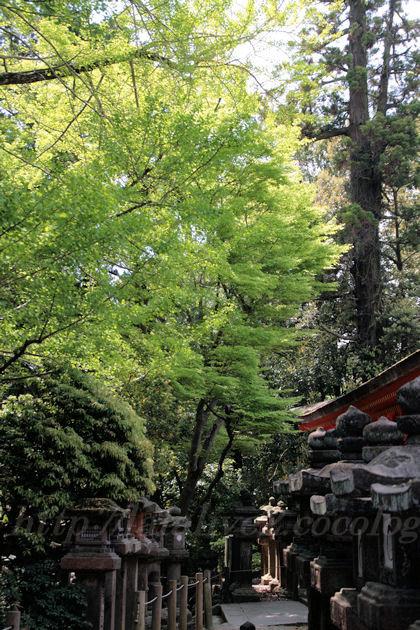 Kasugataisha1